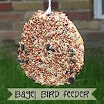 Bird Feeder Using a Bagel 150