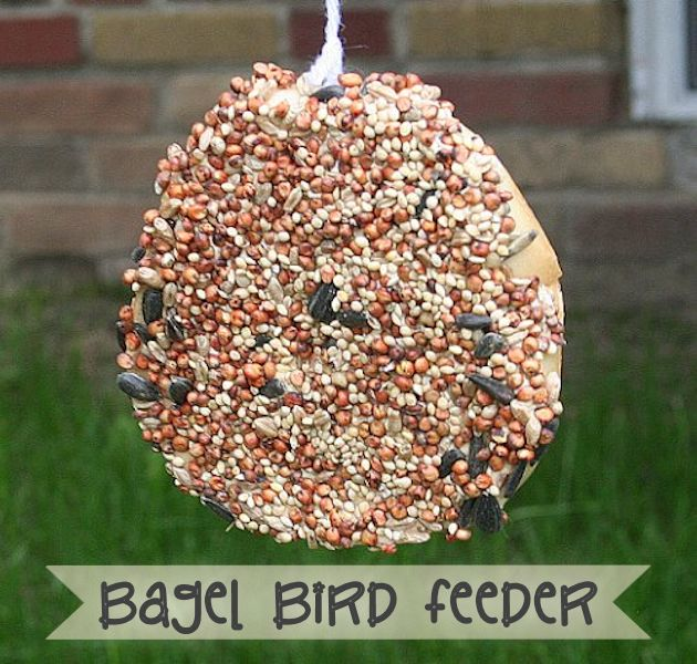 How to Make a Bird Feeder Using a Bagel